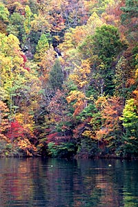 Fall color at Calderwood Reservoir, Calderwood Reservoir (NC-TN).  Copyright Chris Bell.
